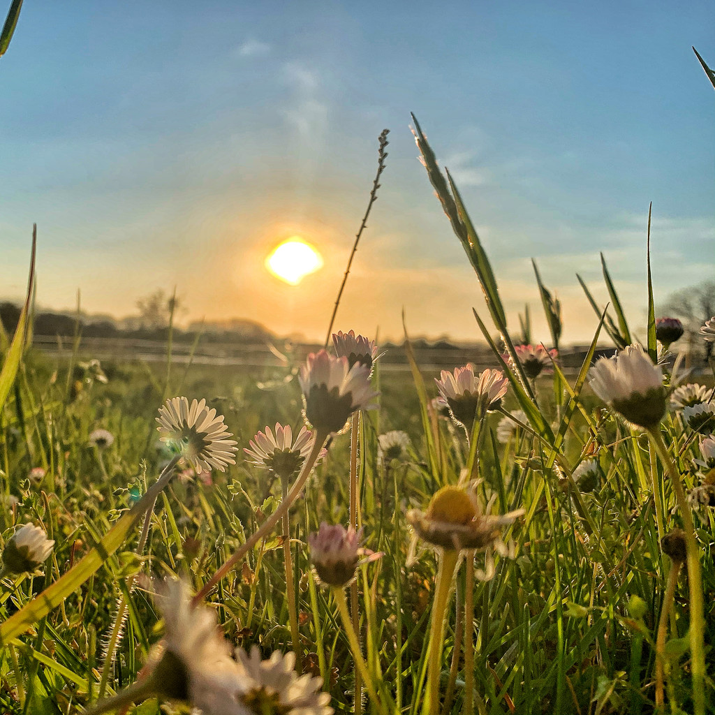 Sunset and flowers.  by cocobella