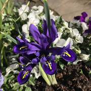 24th Apr 2021 - Blooming Marvellous