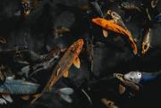 25th Apr 2021 - here fishy fishy...