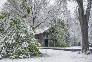 25th Apr 2021 - Mid-Spring Snow