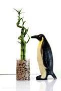25th Apr 2021 - world penguin day