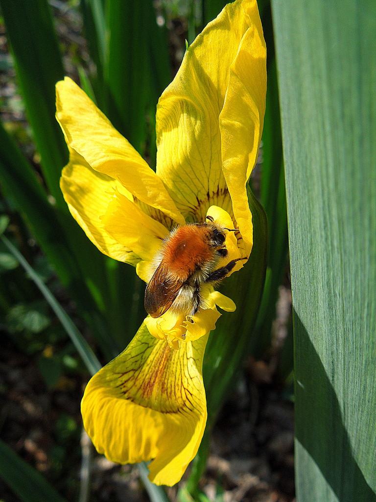 A bee, finally ! by etienne