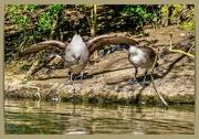 26th Apr 2021 - Argumentative Birds