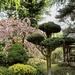 Pure Land Meditation Japanese Garden