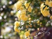 11th Apr 2021 - Mellow yellow...