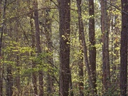 9th Apr 2021 - Springtime in my woods...