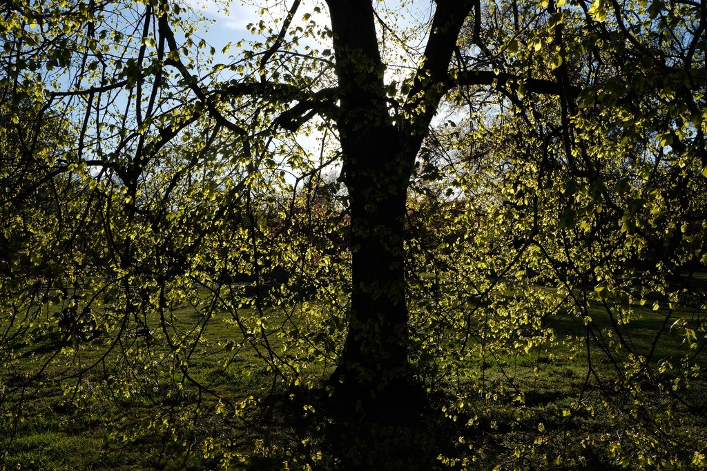 Baby leaves 🍃 and the sunlight  by vincent24