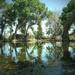 Sonoran Pond