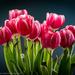 Lens Test 2: Tulips
