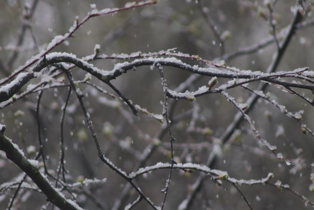 А снег идет. +2❄ by nyngamynga