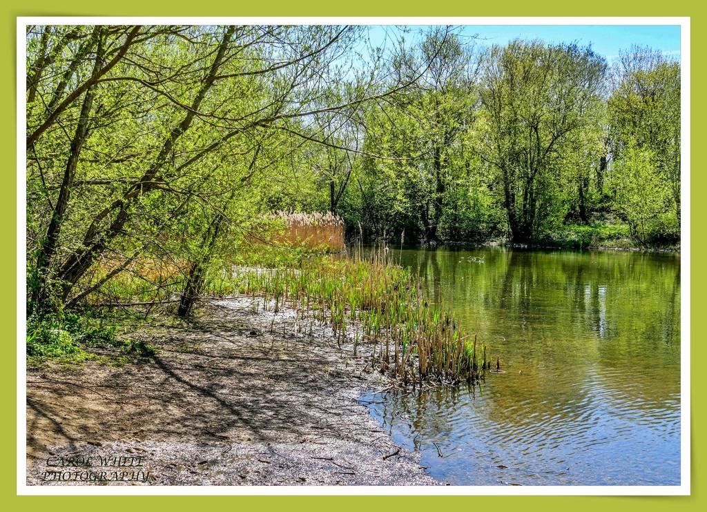 Lake View by carolmw