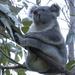 in repose by koalagardens