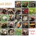 Fungi fun April by sugarmuser