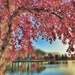 City Park - Ottumwa, Iowa by lynnz