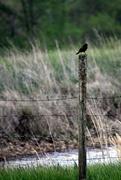 27th Apr 2021 - 30 Shots, One Subject - 27 -- Blackbird