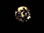 27th Apr 2021 - Bashful moon