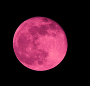 27th Apr 2021 - Pink moon