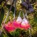 Gum blossom babies