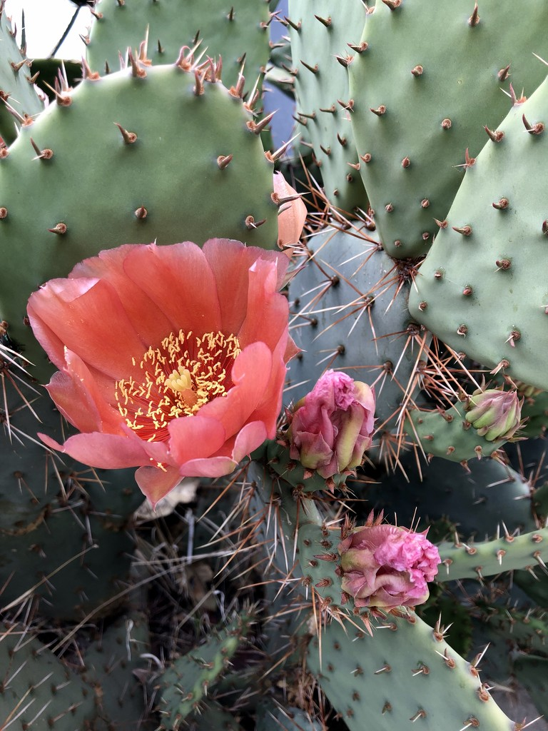 Cactus by loweygrace