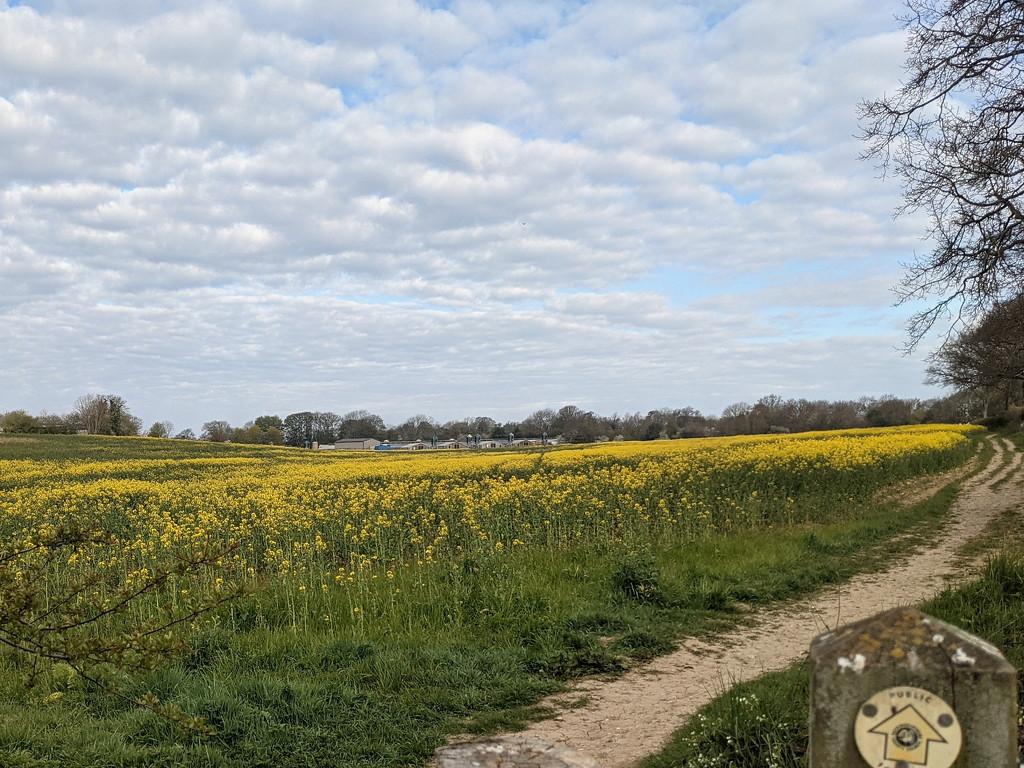 Farm View by bulldog