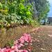 Pink petals rain.
