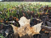 28th Apr 2021 - Dew on the grass