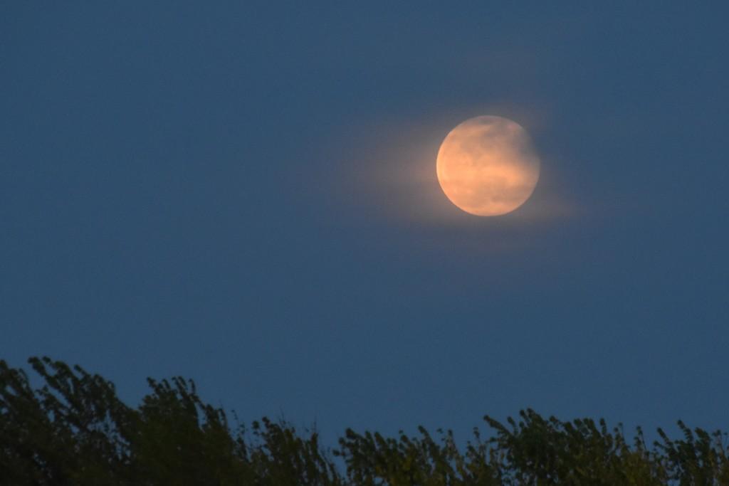 Pink Moon by genealogygenie