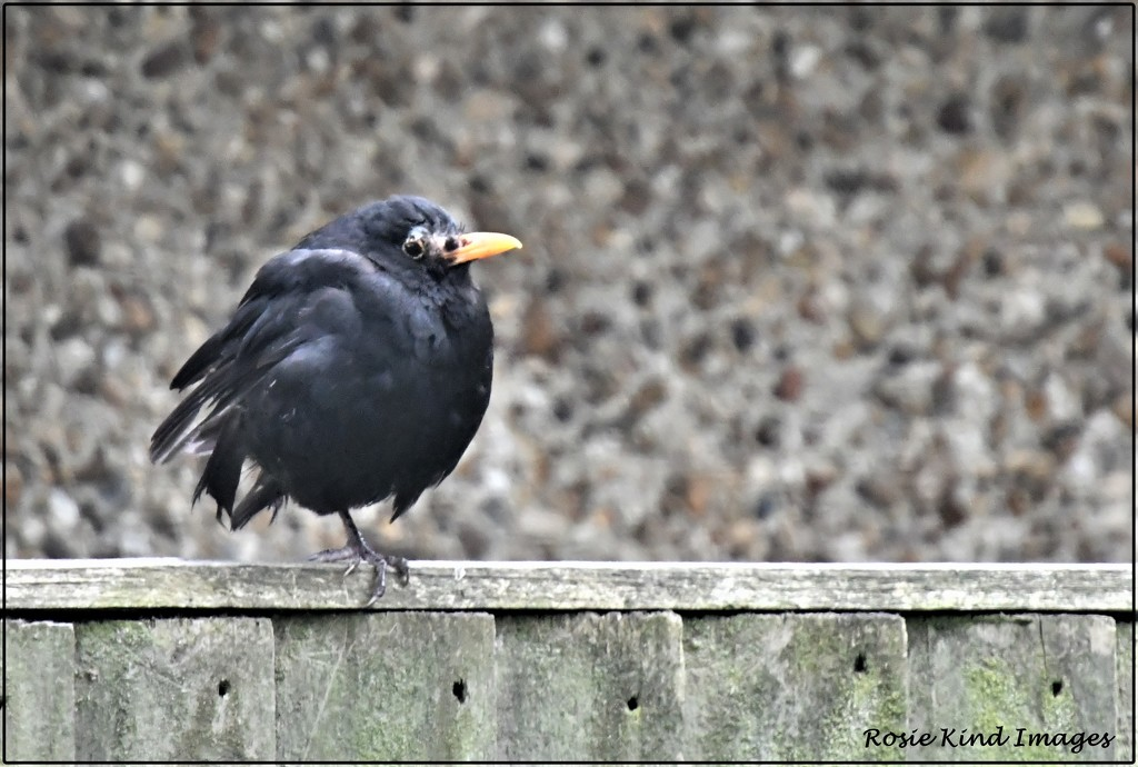 Sitting on the fence by rosiekind
