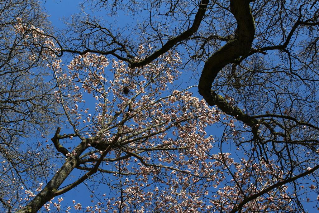 April 27th Winkworth by valpetersen