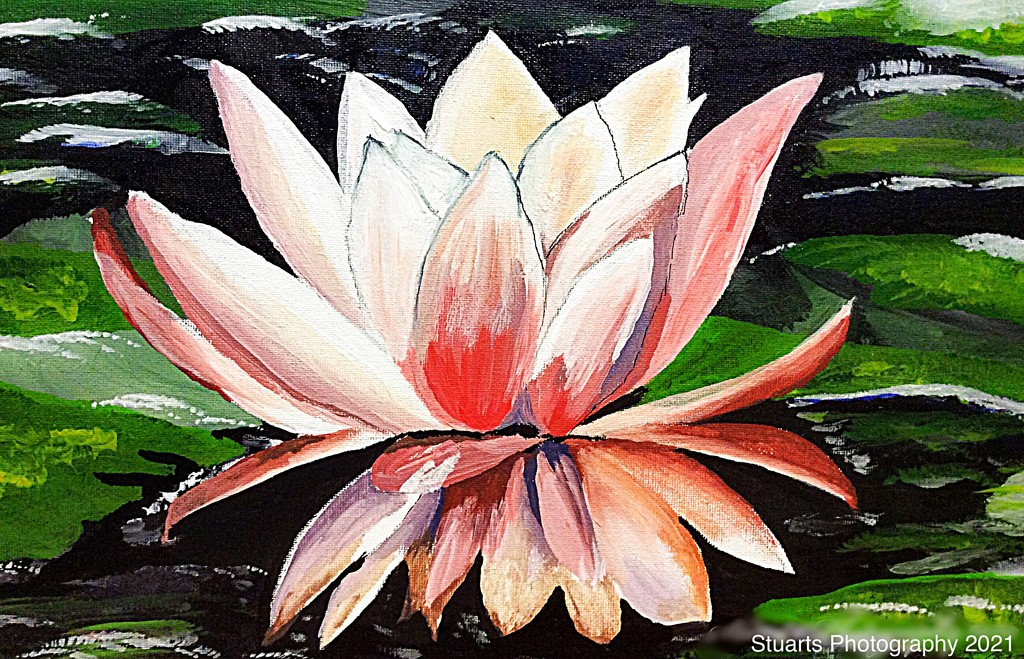 Water lily (painting) by stuart46