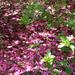Fallen blossoms...