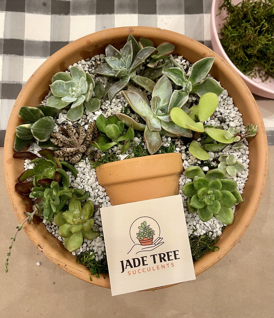 Succulents by tskipper