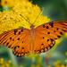 I do love butterflies!