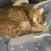 Kirra cat