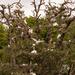 Tree Full of Birds!