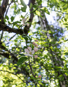 26th Apr 2021 - The blossoming time of the year
