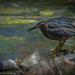 A Most Interesting Looking Bird