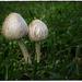 A bit of fungi