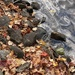 Leaves, rocks, water