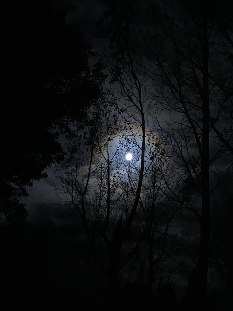 Stormy Moonlight by kiwinanna