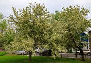 29th Apr 2021 - West Orange Blossoms