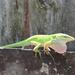The green lizard by dogwoman