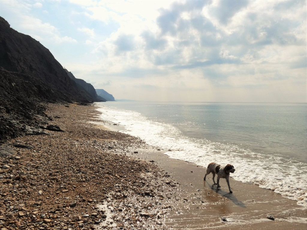Charmouth by julienne1