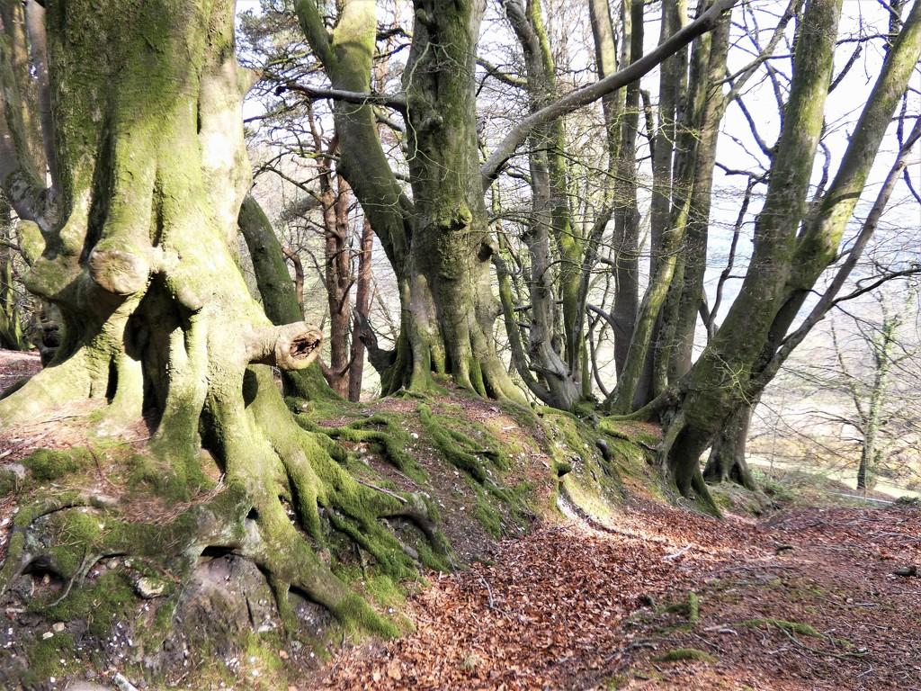Tree shapes by julienne1