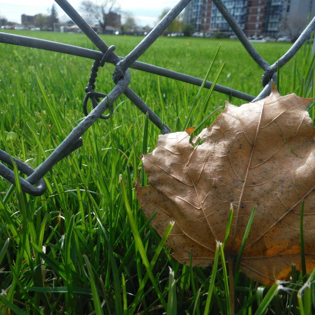 Leaves, Grass, Field by spanishliz