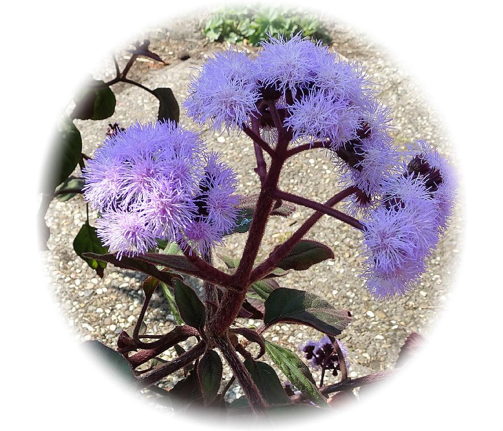 flower by gijsje