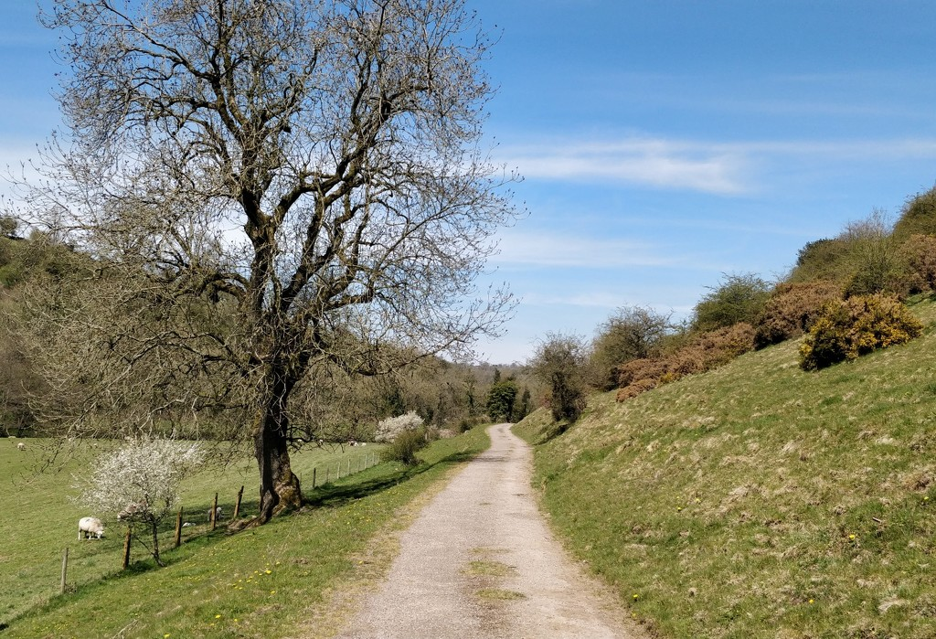 Today's walk by roachling
