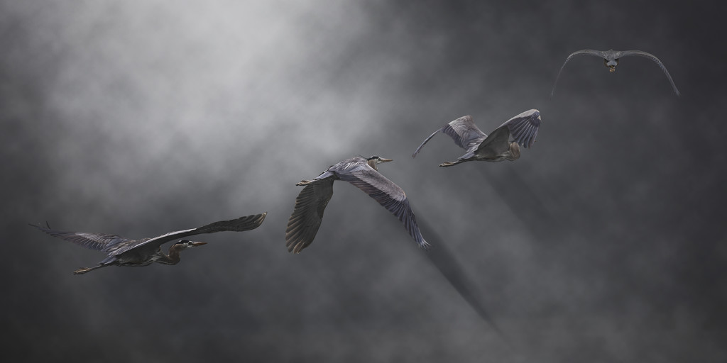 The Great Blue Heron that got away by mikegifford