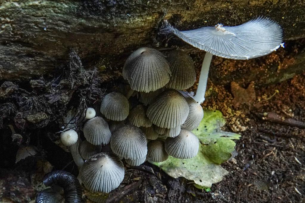 Autumn fungi by maureenpp