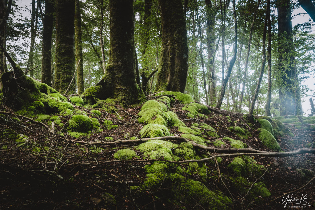 Moss in the Woods by yorkshirekiwi